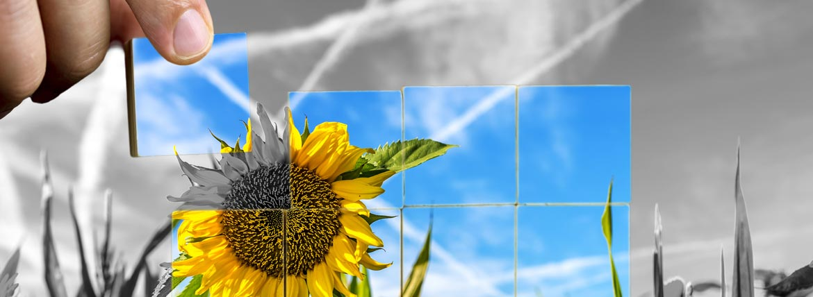 Sunflower and Sky Cubed Picture